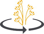 crop-rotation